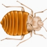 pctbug