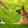 Dog Guard Out Of Sight Fencing