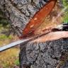 Tree Services Pembroke Pines