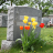 Scott's Chapel Hill Mortuary
